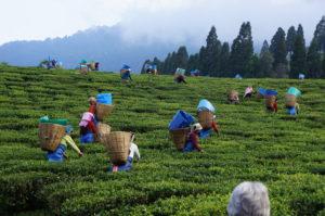 tea-festival-assam-tourist-spots2