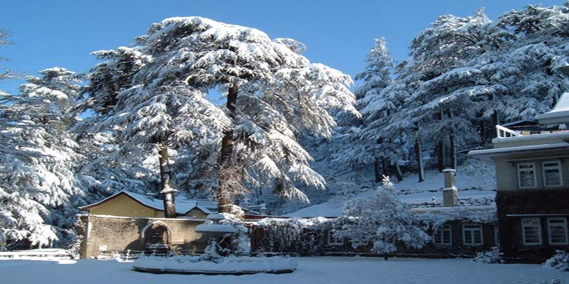 shimla snow season