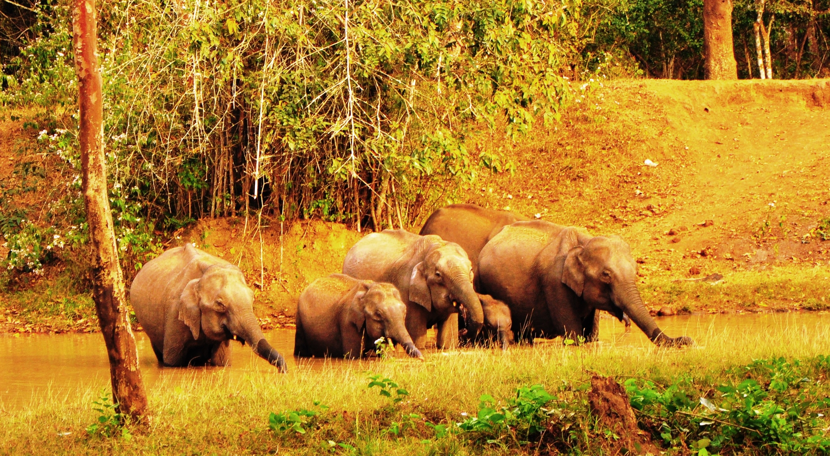 Places to visit in Nagarhole