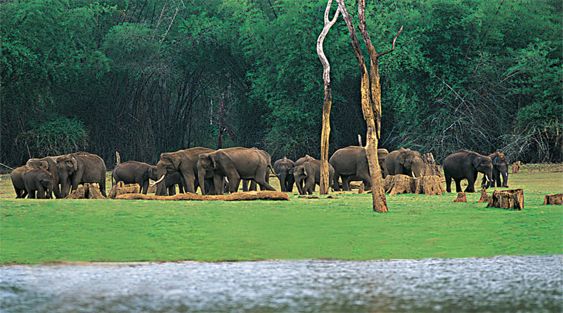 thekkady wildlife safari