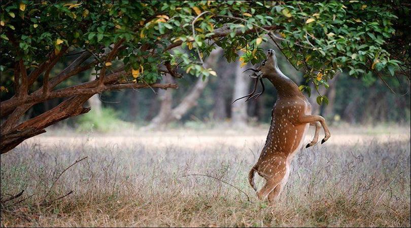 national park madhya pradesh