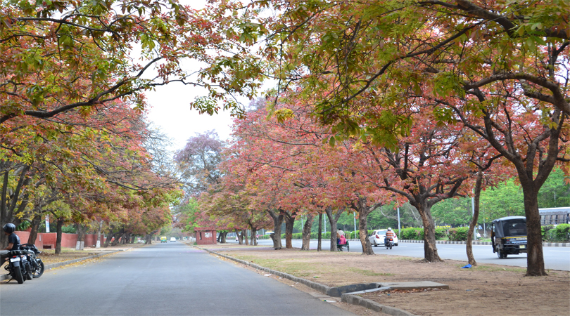 chandigarh city tour attraction