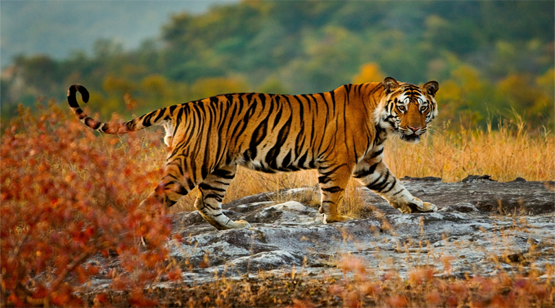 autumn bandhavgarh national park