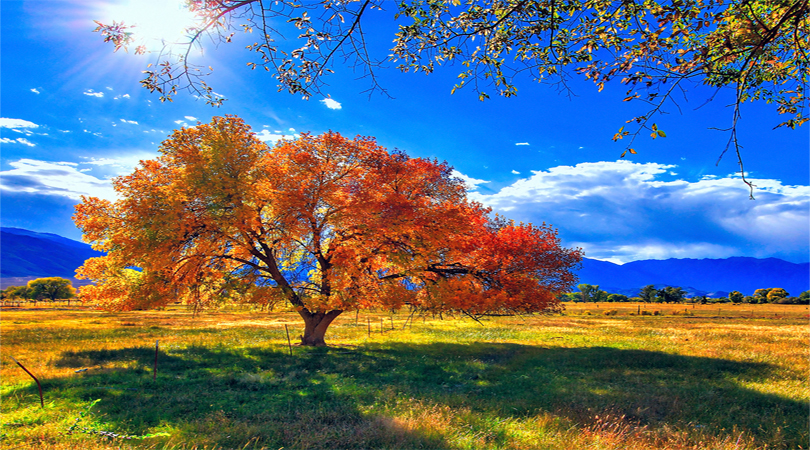 autumn california