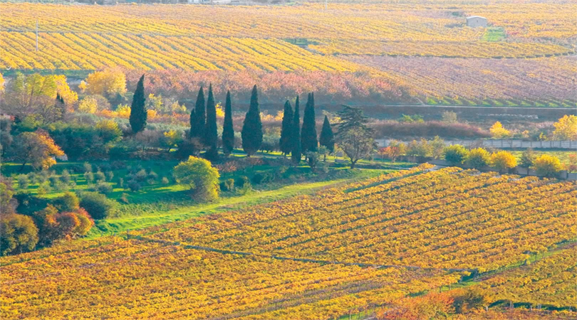 autumn in soave italy
