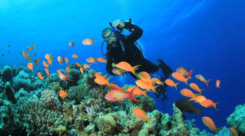 netrani scuba diving