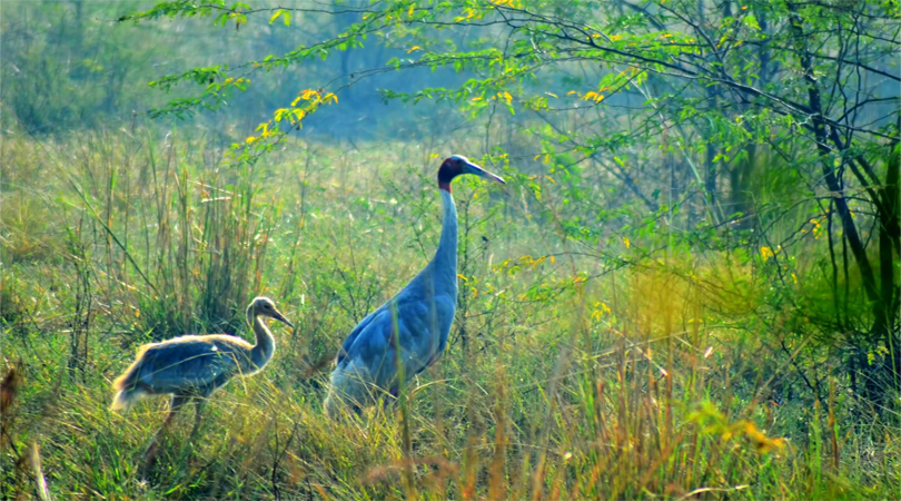 mhadei-wildlife-sanctuary-goa