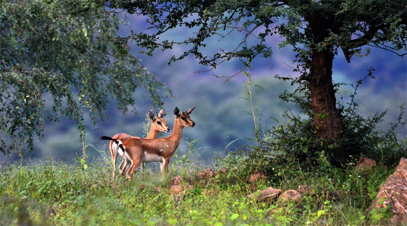 binsar-wildlife-sanctuary
