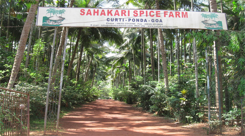 spice-plantations-goa