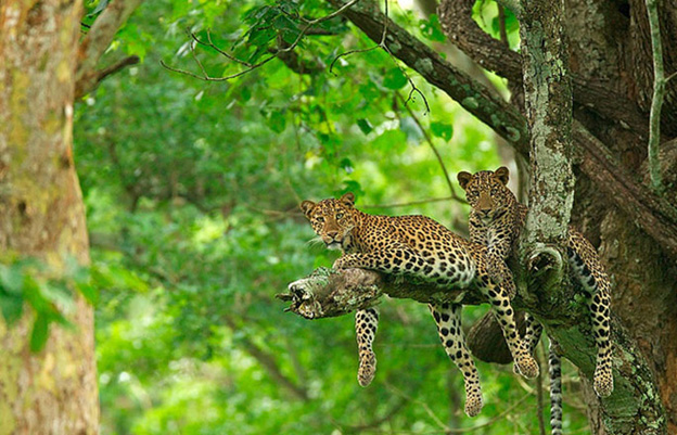 Kabini Wildlife Sanctuary